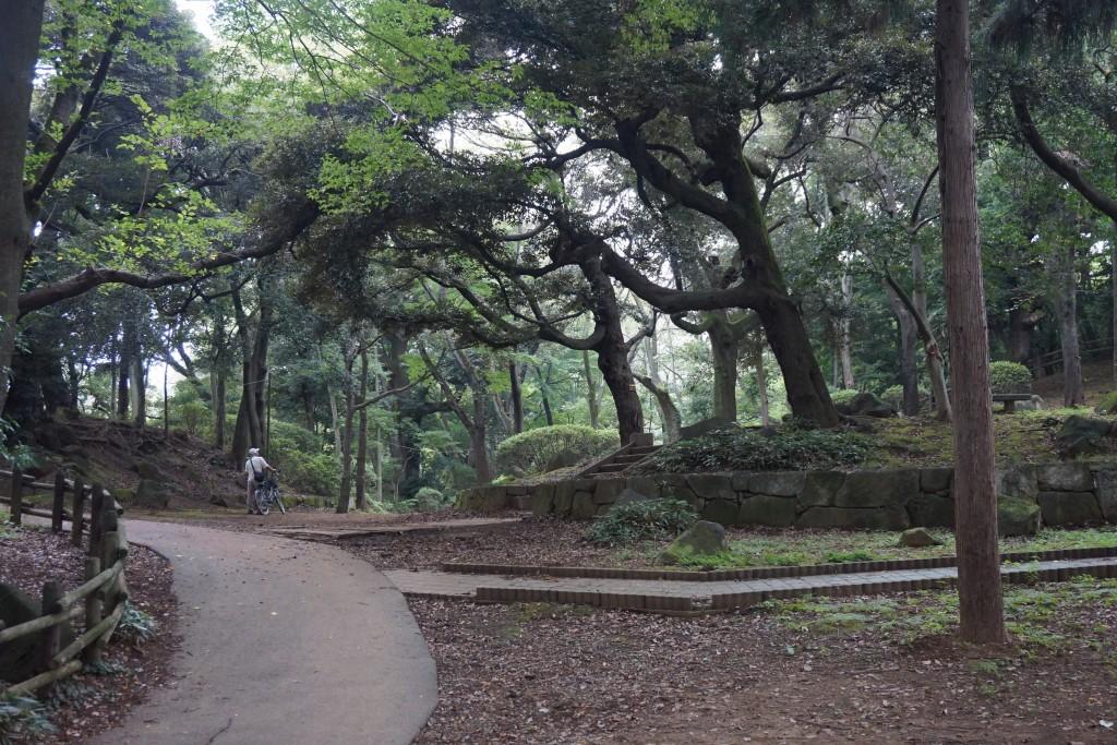 里見公園 森の道